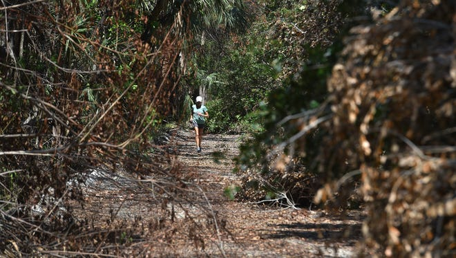 """Stephanie Hahn, 64, of Orchid Island Golf and Beach Club, jogs south through the fallen tree branch littered north side of the Jungle Trail off County Road 510 on Thursday, Sept. 28, 2017, in Indian River County. The roadway is obstructed with tree branches and debris from Hurricane Irma, making the road impassable for cars. """"You can get around it if you are walking or running now, but you can't drive through,"""" Hahn said. To see more photos, go to TCPalm.com."""