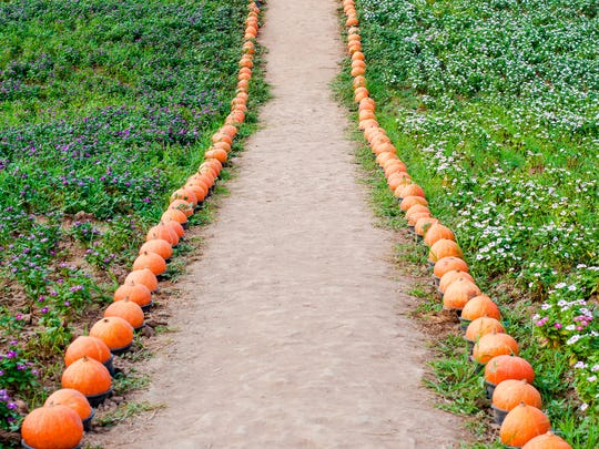The Seven Valleys portion of the York County Heritage Rail Trail will be decorated and lighted with hand-carved pumpkins on Saturday, Oct. 15.