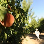 California agriculture faces serious threats from climate change, study finds