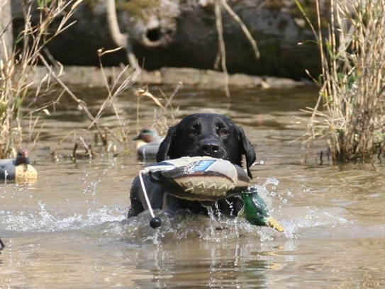 The Super Retriever Series is this weekend.