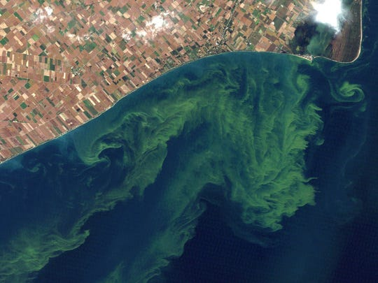 This 2011 satellite photo provided by NASA shows algae blooms on Lake Erie.