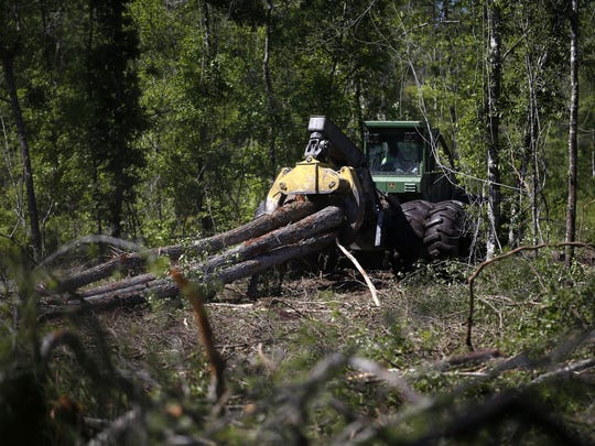 Trees are leveled and dragged away from land in southern Leon County as part of a logging operation.