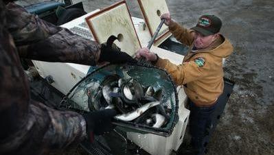 The TWRA winter trout release program is underway.