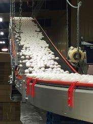 Bird Flu Egg Imports_Hill