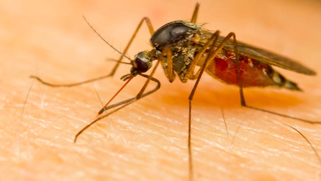 Cincinnati is ranked the No. 11 most mosquito-infested city in the U.S., according to Terminix.