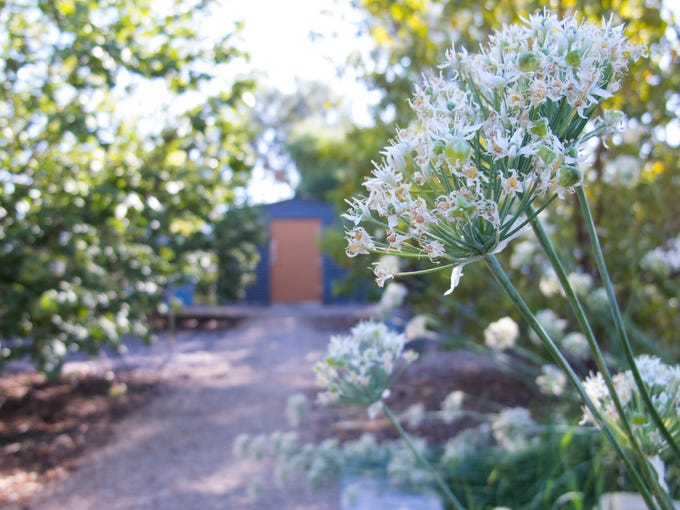 Cool Home Diy Atude And Thousands Of Seeds Grow An Urban Farm In Scottsdale