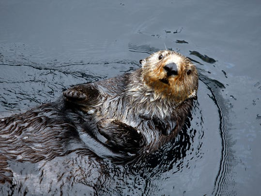 -sea otter29.jpg_20090928.jpg