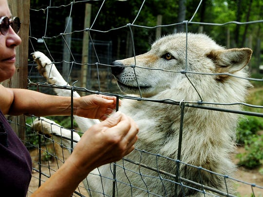 Nancy Brown visits a pair of Full Moon Farm's wolf-dogs.