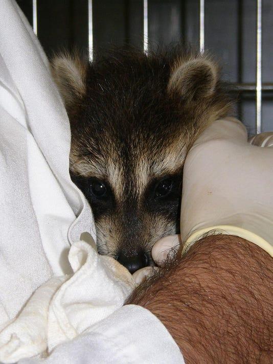 -ASBBrd_12-08-2011_RptMarl_1_A002~~2011~12~06~IMG_BRI_1204_wildlife_re_1_1_K.jpg