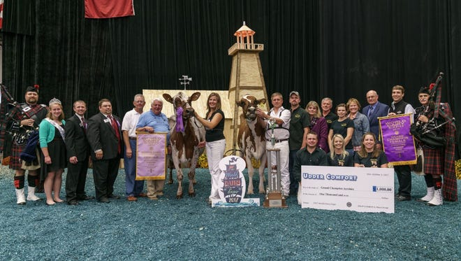 Grand Champion was awarded to Palmyra Berkely P Ruth-ET (right), owned by Evan Creek of Hagerstown, MD, in the International Ayrshire Show at World Dairy Expo. Bear Ayr Burdette Ray, owned by Peter Vail and Mike and Linda Hellenbrand, Cross Plains, WI., reclaimed her title as Reserve Grand Champion Ayrshire.