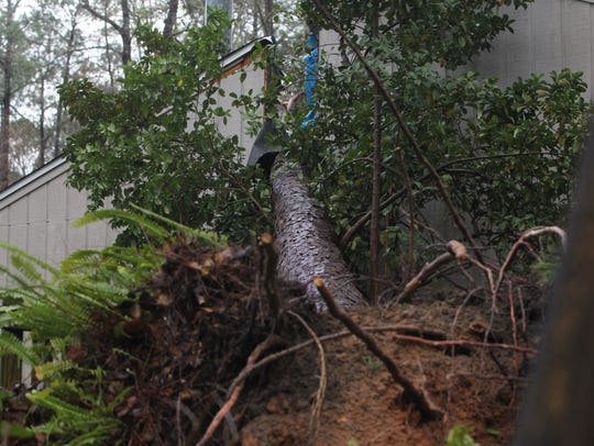 A pine tree from a neighbor's yard was uprooted during