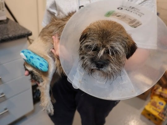 A dog from Kentucky which was treated for old untreated