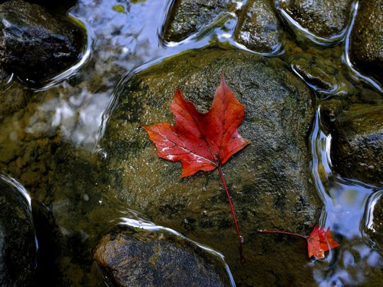 A fallen leaf rests on a rock in the Pine River at the Pine River Nature Center.