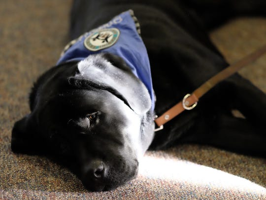 Preston, a therapy dog, was stationed outside Judge