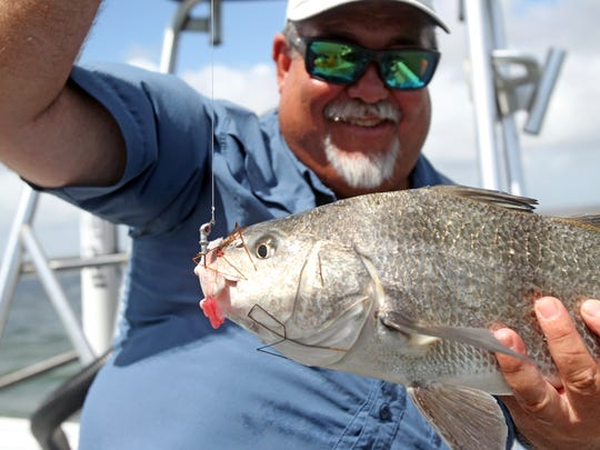 Many anglers enjoy sightcasting for drum and redfish along the shallow fringes of the Landcut.