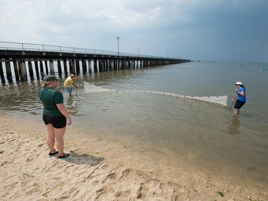 Near where a naturalist group gave this seining demonstration