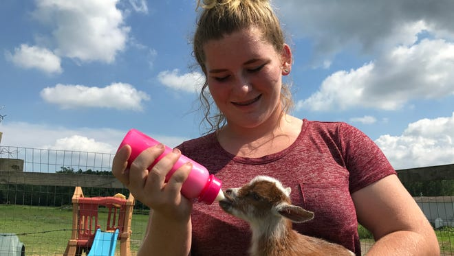 Lenee Maddox feeds a recent addition to her herd of Nigerian Dwarf goats that she breeds, sells and shows in dairy goat competitions across Maryland.