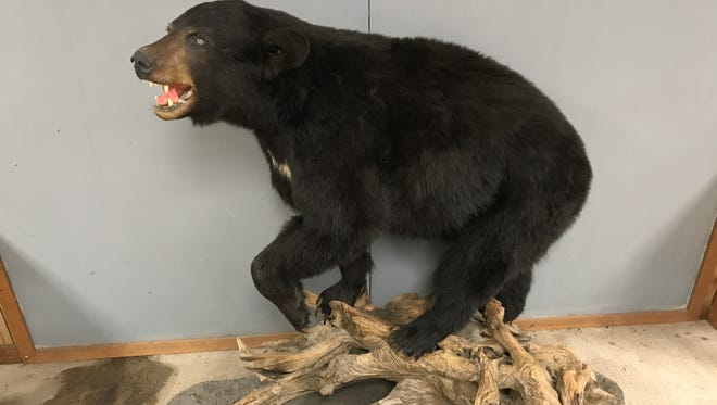 Jim Eis of Mishicot donated this black bear mount crossing over tree limbs to the Mishicot Nature Center. The nature center is a work in progress, although we all can see what will be the center of attraction.