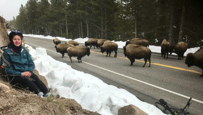 Abigail Lichliter sits on the side of a cliff waiting for a herd of bison to pass so she can continue her 60-mile roundtrip bike ride through Yellowstone National Park.