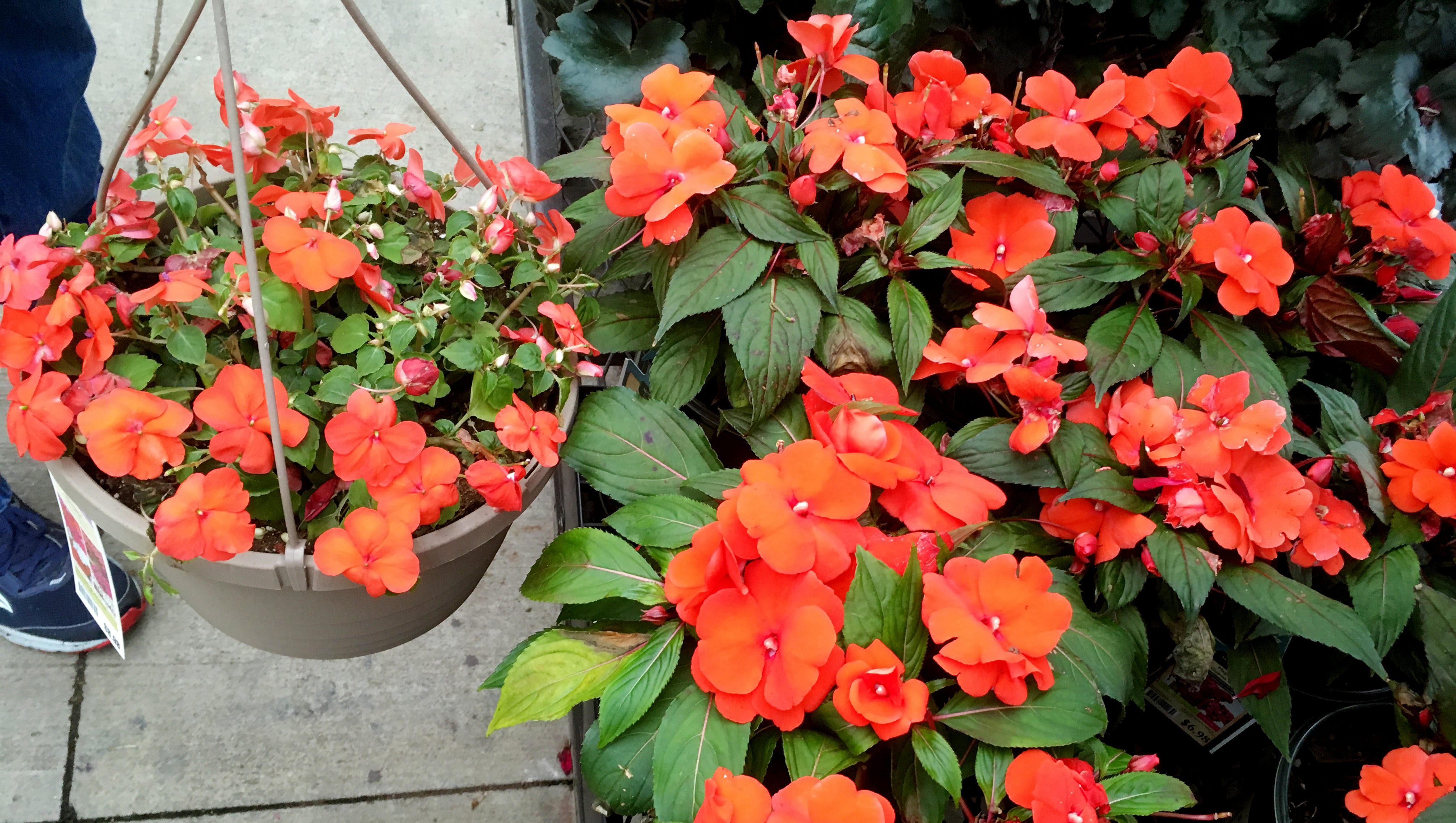 Best Plants For Your Porch And Patio That You Almost Can T Kill