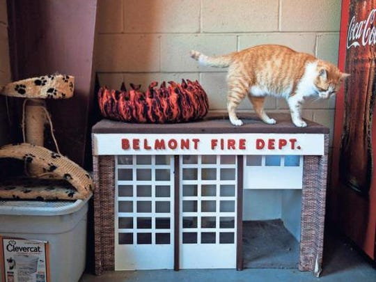 Flame, the Belmont Fire Department cat, will be honored by the ASPCA on Nov. 16.