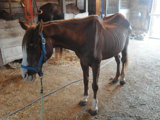 horse abuse 1.JPG