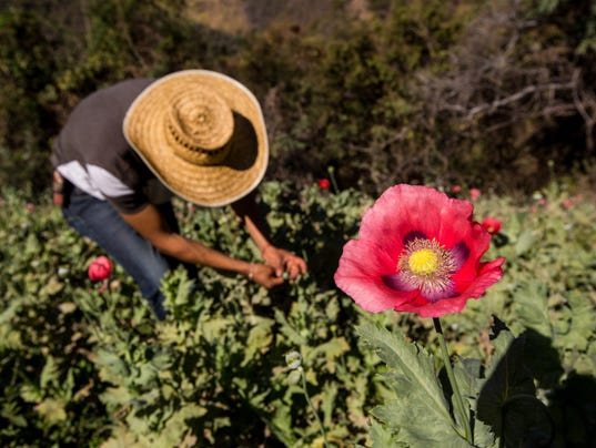Mexican cartels pushing more heroin after US states relax marijuana laws