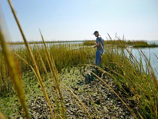Stanley Jester of Chincoteague stands on one of the marshes that are part of his oyster bed in the shallows of Chincoteague Bay, where he harvests oysters by hand at low tide.