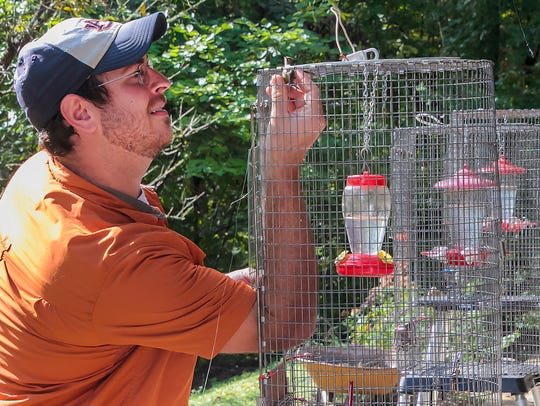 Wildlife, including hummingbirds, is abundant at Barfield Crescent Park. In this photo, Shawn Smith captures a hummingbird that will be banded as part of a past Hummingbird Festival held at the park.