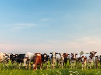 Candidate cattle calls may help cull the herd