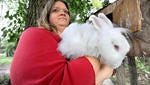 Samantha Wilson holds an angora rabbit. She is in the middle of a Shelby controversy about keeping livestock in city limits.