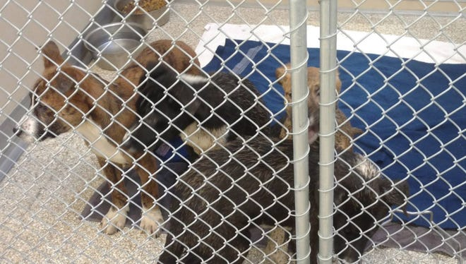 A witness said these puppies were dumped out of a car window in Fairfield on Tuesday.