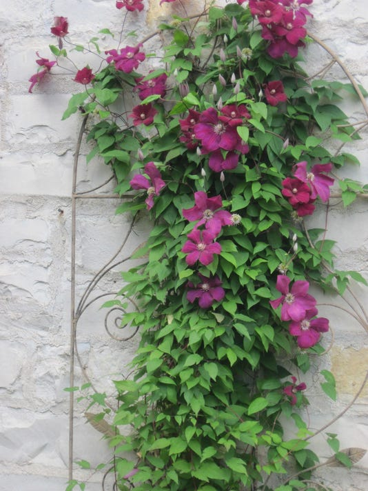 Garden Questions Fast Growing Vines Offer Privacy To Structure