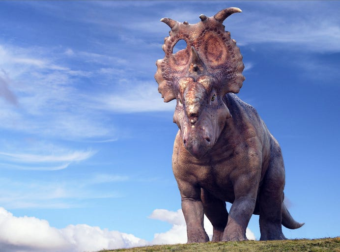 First look  Walking With  Pachyrhinosaurus Walking With Dinosaurs
