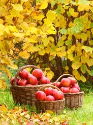 Hillene's Hilltop Orchard will host their annual Leaf