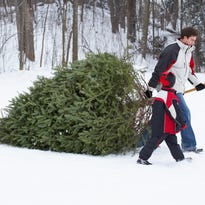 A gardener's guide to picking the perfect Christmas tree