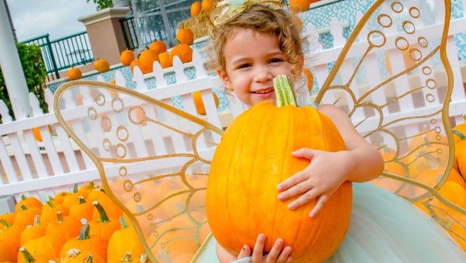 Three-year-old Haley Jantzen findsthe perfect pumpkin.