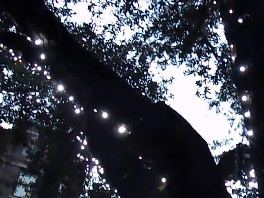 Tree+Illumination+Thumbnail.jpg