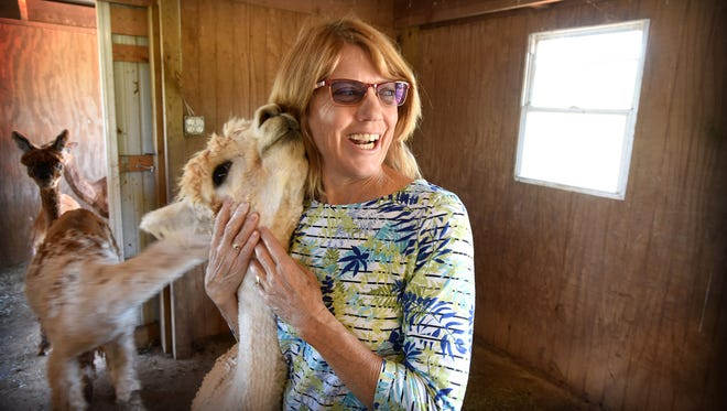 Kristie Smoker gets affection from one of the alpacas at Sweet Valley Suris in North Annville Township, which she and her husband Brion Smoker own and operate.