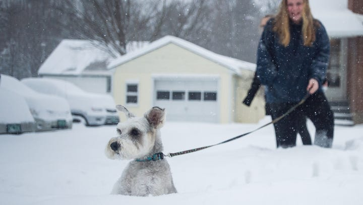 Vermont dogs hit the snow: Check out these cute canines take on winter weather