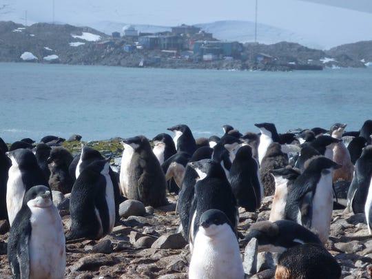 penguins (2)