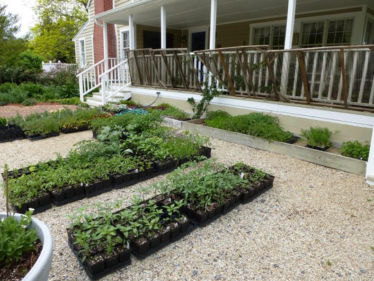 Black Hog Farmstead includes a plant propagation business as well as a bed and breakfast.