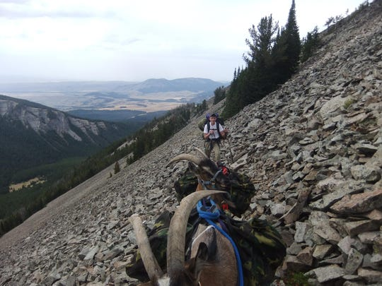 Parker Turner hikes on a hunt for a mountain goat with