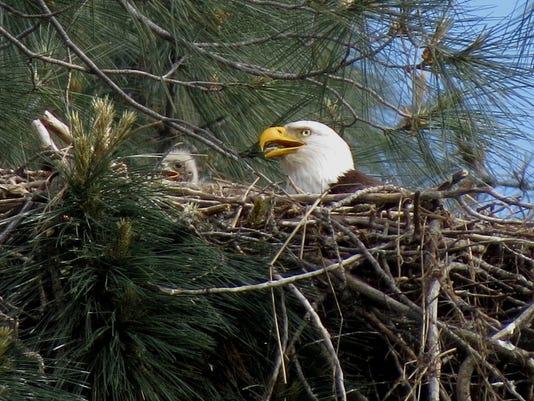 eaglet+with+Spirit-5.jpg