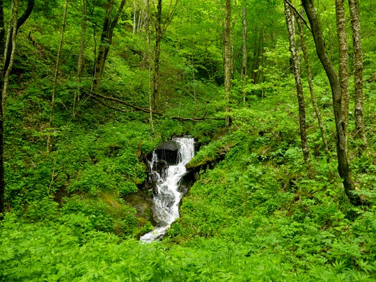 The Sheepback Knob/Carpenter Creek property adjoining the Great Smoky Mountains National Park will be purchased for permanent protection by the Conservation Fund thanks to a grant from the state Clean Water Management Trust Fund.