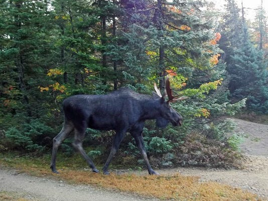 Counting Moose