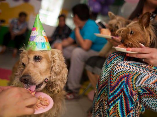 dog bday cake