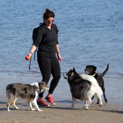 Debbie Hazan plays with her two dogs and some others