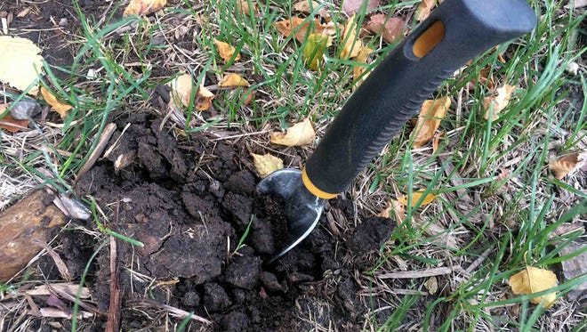 When putting a garden to rest for the winter, it's best to include time spent thinking of ways to improve its soil for the following year's crop.