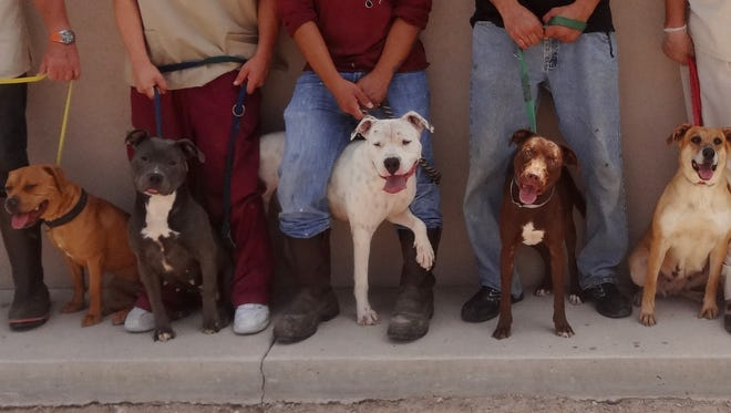 Some of the 47 dogs with tick-borne diseases available at the Animal Service Center of the Mesilla Valley.
